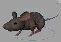 老鼠maya2015贴图绑定动画