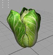 白菜maya2009贴图动画