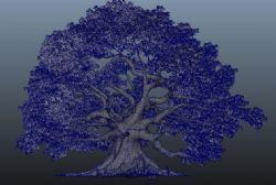 大枫树maya模型