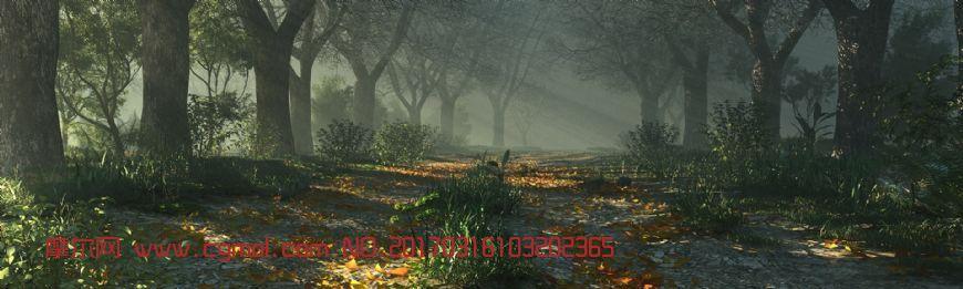 原始森林清晨�光�鼍�赢�(�W�P下�d)