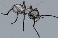 蚂蚁-犀牛建模