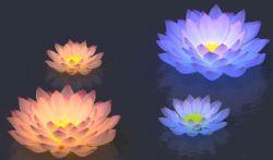 蓝莲花,莲花灯max模型,带贴图灯光