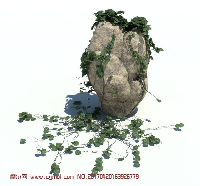 石头草墙藤蔓植物