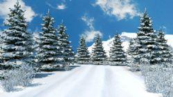 冬季氛围冬天的松树带雪山的雪景场景
