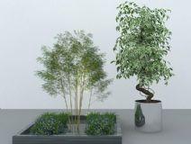 竹子灌木花草盆景