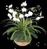 高精度兰花