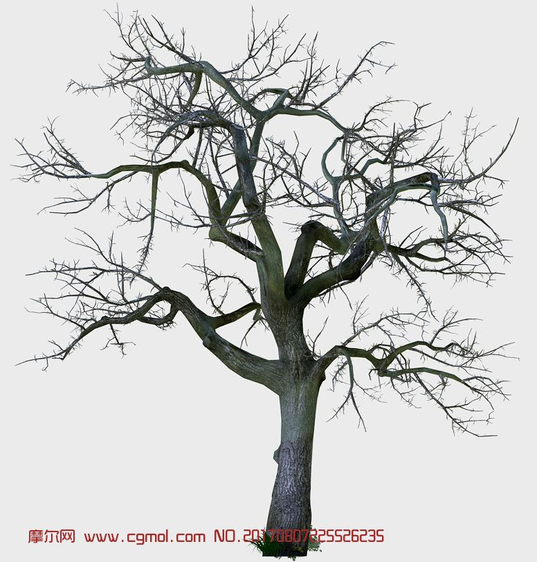 原生态大树,冬季树模型