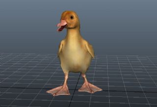 maya写实鸭子