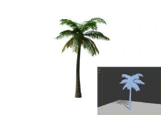 树 棕桐树