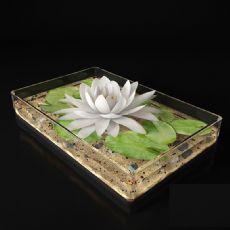 玻璃缸中的荷花莲花