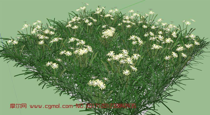 开满白色小花的草地