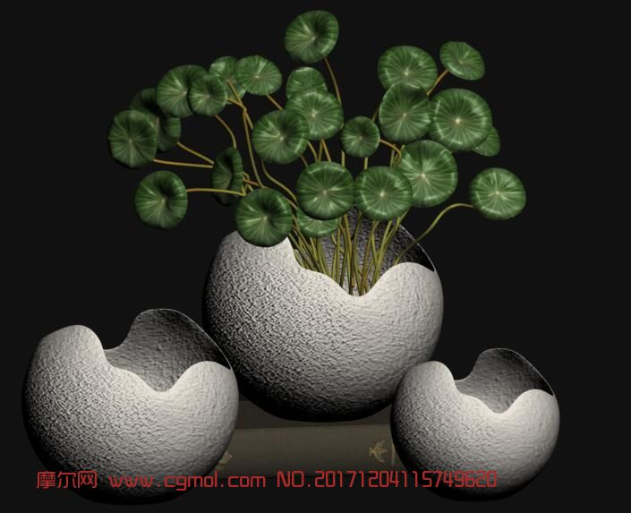 金钱莲盆栽