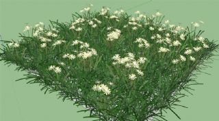 �_�M白色小花的草地