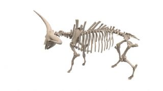 水牛高精度骨骼maya模型