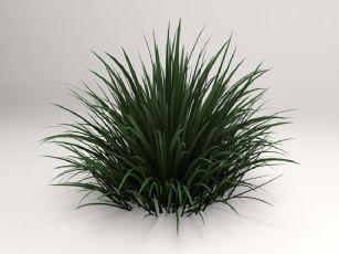 玉龙草,绿化草