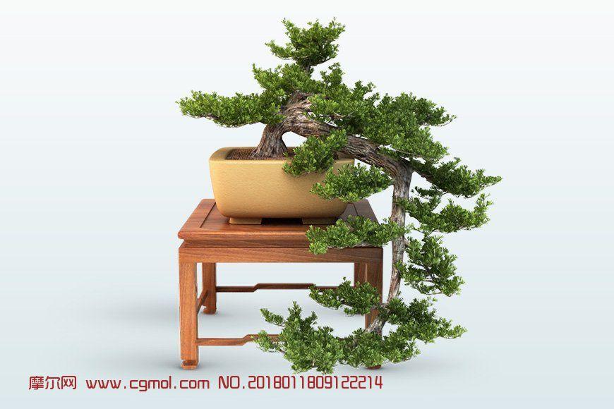 松树盆栽,skp,max格式