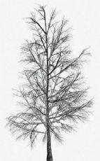 雪后的树景