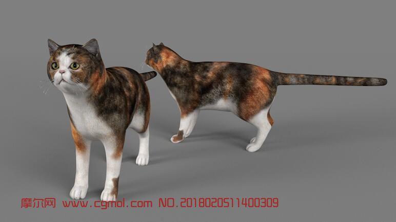 可爱小猫3D模型(带骨骼),fbx,c4d格式