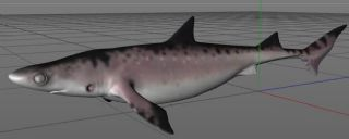 Shark古生物鲨鱼C4D模型