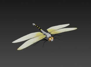 蜻蜓max模型