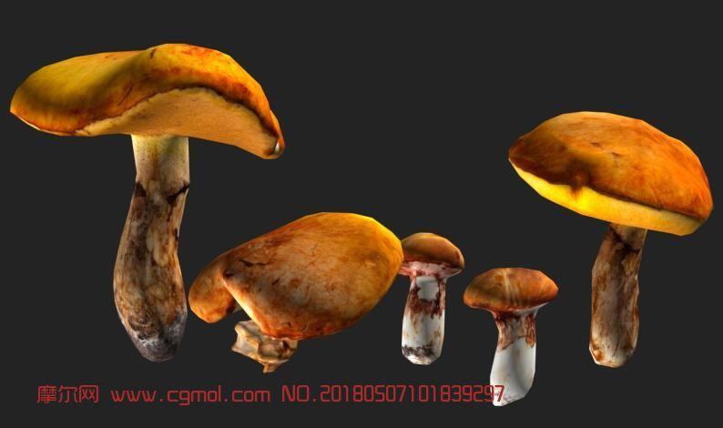 几款蘑菇,野生菌FBX模型