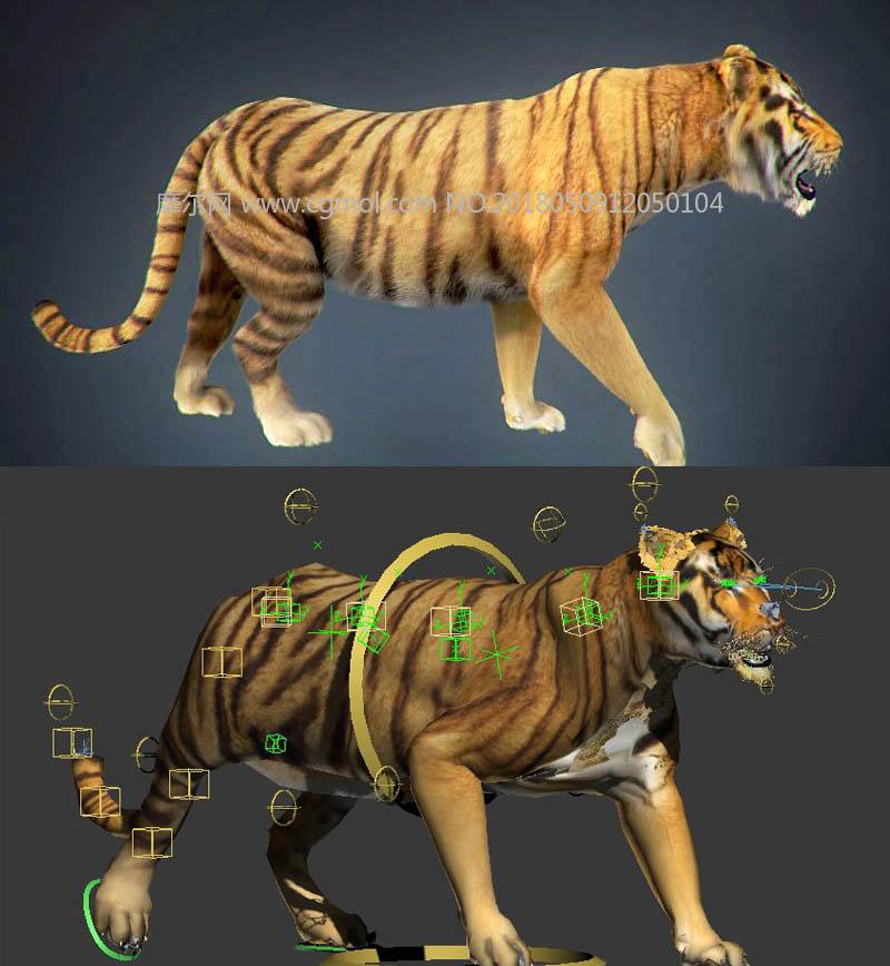 精致的老虎,带绑定,带行走动画