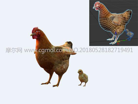母鸡+小鸡max模型