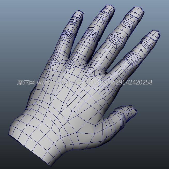 手部结构,手掌