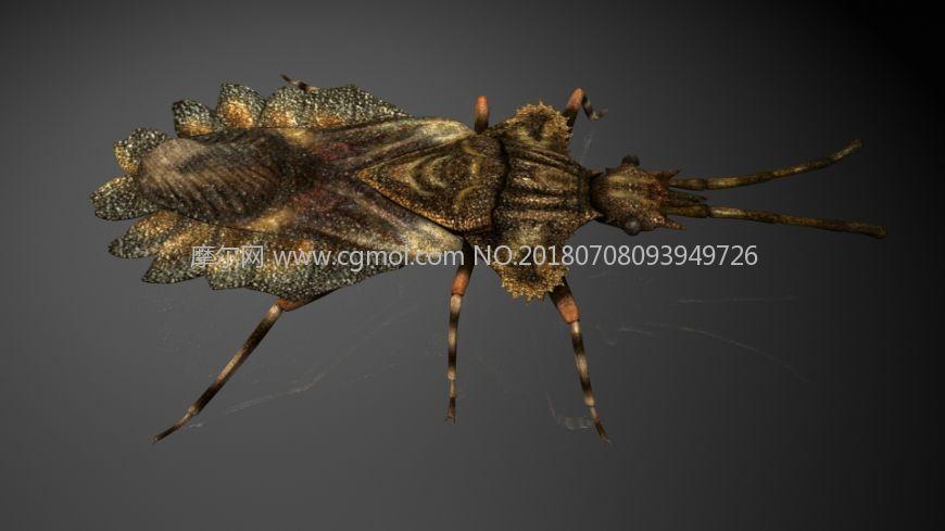 扁蝽,菌蝽,蝽,锥蝽,影视级写实昆虫,mb,fbx,obj格式