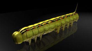 白线蝠蛾幼虫,蝙蝠娥幼虫,毛毛虫,绿毛虫,写实昆虫,mb,fbx,obj格式