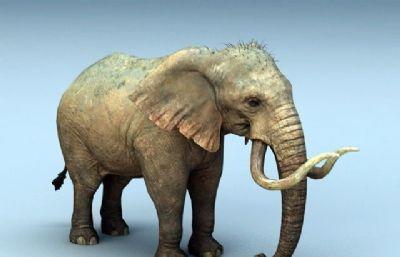 大象非洲象��洲象