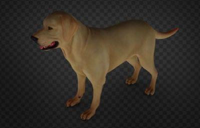 金毛犬大狗,拉布拉多犬,��物狗,FBX,OBJ格式
