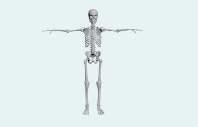 maya模型人體骨骼骷髏