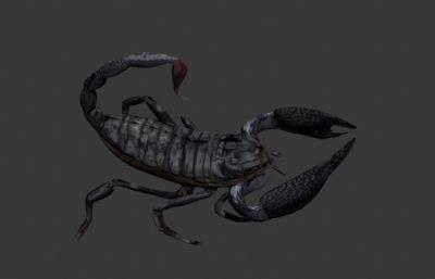 蝎子,毒蝎模型