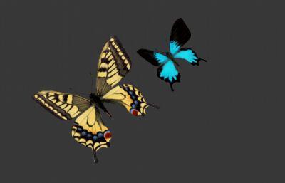帝王蝶,�P尾�{蝶,蝴蝶模型