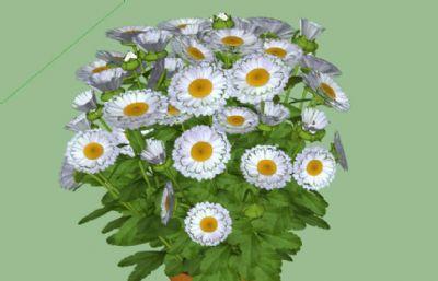 野菊花盆栽模型