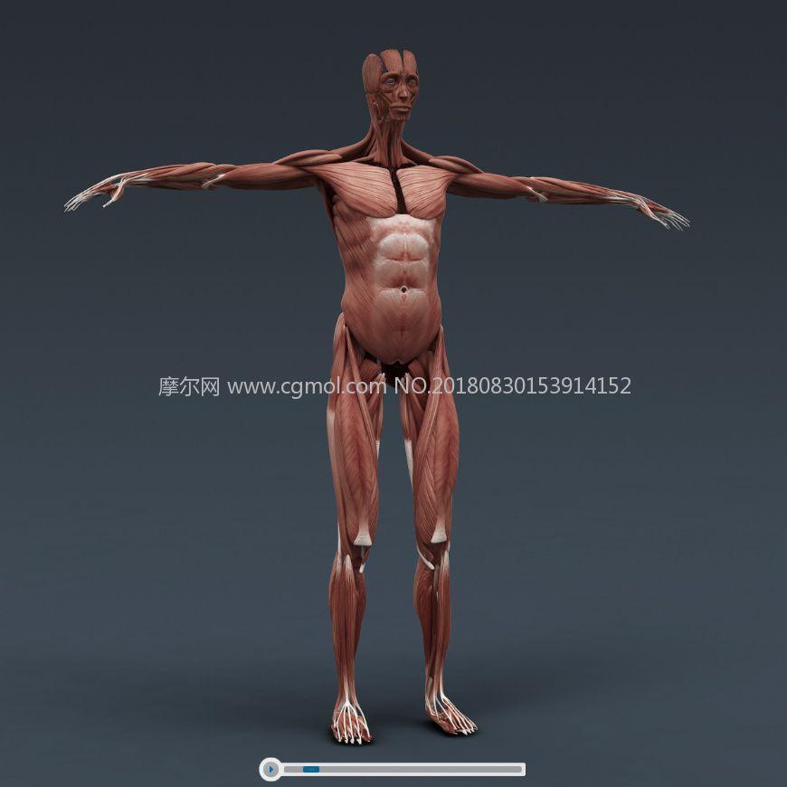 �@�@!男女人�w器官�Y��完整解析max�t�W人�w模型,材� �N�D全(�W�P下�d)
