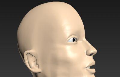 口腔鼻腔�^部切面解剖模型