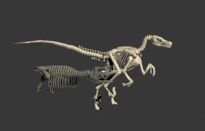 恐��骨架,侏�_�o世界2布�骨架模型