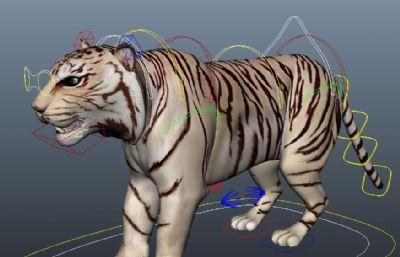有�定的白虎Maya模型