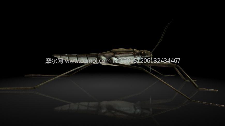 动物,外星生物maya写实模型 学名:池黾,水黾   别名:水马,水蜘蛛,水母