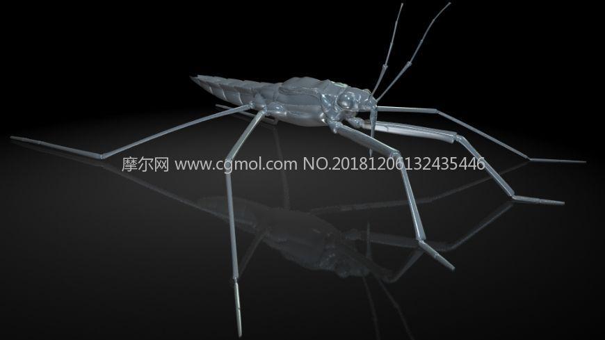 池�w,水�w,水蜘蛛,水母�umaya影������昆�x模型,��MB,FBX,OBJ格式