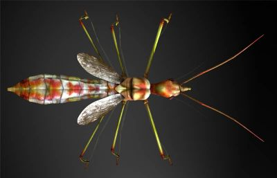 蜂猎蝽maya影视级?#35789;?#26118;虫模型,MB,FBX,OBJ格式
