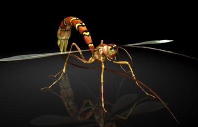 姬蜂maya模型,影视级?#35789;?#26118;虫,有MB,FBX,OBJ格式