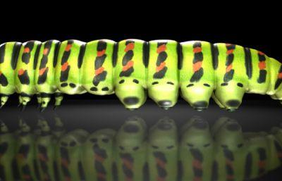 君主蝴蝶毛虫,毛毛虫,蝴蝶幼虫maya影视级模型,有MB,FBX,OBJ格式