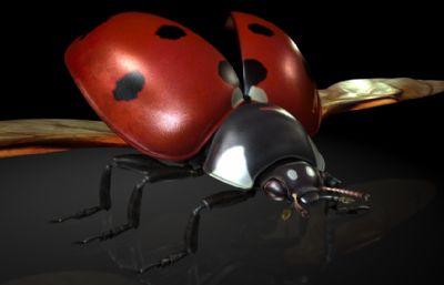 瓢虫,金龟子,红娘,臭龟子maya模型,有MB,FBX,OBJ格式