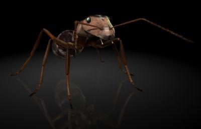 石狩红蚁,红蚂蚁MAYA?#35789;?#26118;虫模型,MB,FBX,OBJ格式