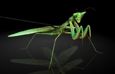 螳螂,刀螂MAYA?#35789;?#27169;型,MB,FBX,OBJ三种格式