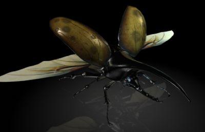 赫拉克勒斯,大力神甲虫,长戟大兜虫MAYA影视级昆虫模型,MB,FBX,OBJ格式