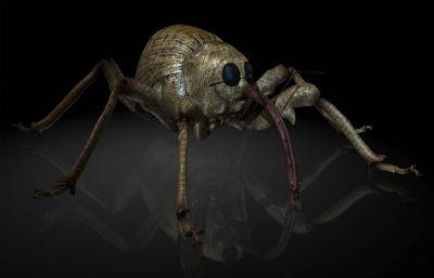 榛子象甲,榛實象鼻蟲MAYA影視級昆蟲模型,MB,FBX,OBJ格式